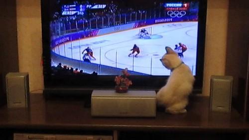 Кошка пачкает экран
